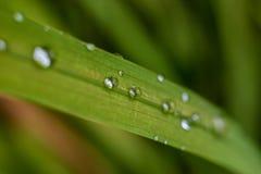 Gräsplan lämnar makroskottet droplet arkivbild