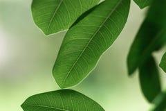 Gräsplan lämnar nytt på naturbakgrund arkivfoto
