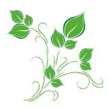 Gräsplan lämnar rankan på vit bakgrund royaltyfri illustrationer