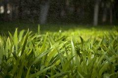 Gräsplan lämnar regnar Under Arkivfoto