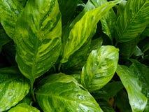 Gräsplan lämnar texturer i naturen, naturbakgrund, lutning färgade sidor arkivbilder