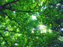 Gräsplan lämnar träd Fotografering för Bildbyråer