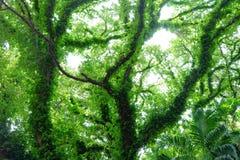 GRÄSPLAN LÄMNAR TREEN Fotografering för Bildbyråer