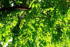 GRÄSPLAN LÄMNAR TREEN Arkivbild