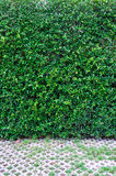 Gräsplan lämnar väggbakgrund och går vägen royaltyfri fotografi