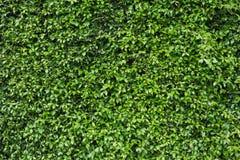 Gräsplan lämnar väggen Arkivfoton