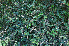Gräsplan lämnar väggen Royaltyfria Bilder