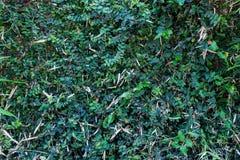 Gräsplan lämnar väggen Arkivfoto