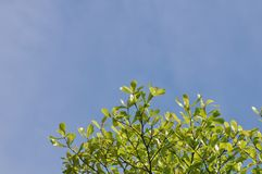 Gräsplan lämnar whit blå himmel royaltyfri foto