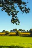 Gräsplan landskap den Bayern Tysklandet arkivbilder
