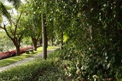 Gräsplan landskap formell trädgård Parkera Royaltyfri Bild