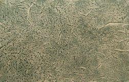 Gräsplan marmorerat papper Royaltyfria Bilder