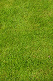 Gräsplan mattar Royaltyfria Foton