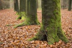 Gräsplan mossa-täckt träd Royaltyfri Bild