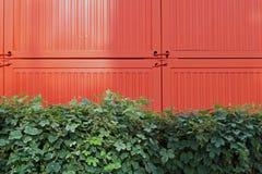 Gräsplan och apelsin Fotografering för Bildbyråer