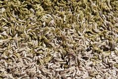 Gräsplan och beige färgmattyttersida Arkivfoto