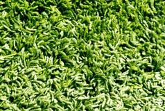 Gräsplan och beige färgmattyttersida Royaltyfri Fotografi