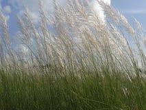 Gräsplan och blått Royaltyfri Fotografi