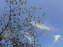 Gräsplan och blått Royaltyfria Bilder