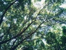 Gräsplan och blått arkivfoton