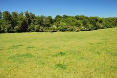 Gräsplan och blått i sommar Royaltyfri Foto