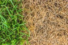 Gräsplan- och bruntgräsbakgrund Arkivfoton