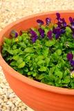 Gräsplan och färgrika blommor Arkivbild
