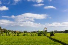Gräsplan och Gold Fields, blåa himlar Royaltyfria Foton