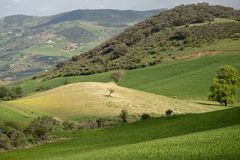 Gräsplan och guld- bergigt landskap Fotografering för Bildbyråer
