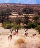 Gräsplan och guld för Afrika ` s i harmoni Royaltyfri Foto