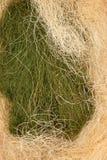 Gräsplan och guling tilltrasslad sisal royaltyfri foto