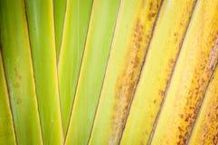 Slutet av torrt gömma i handflatan upp leafen som abstrakt bakgrund. Royaltyfri Bild