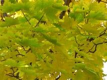 Gräsplan och gulingen lämnar Arkivfoto