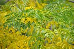 Gräsplan och gulingen lämnar Royaltyfria Bilder