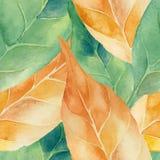 Gräsplan- och gulingsidabakgrund Royaltyfri Fotografi