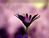 Gräsplan och purpurfärgad härlig blomma Arkivbilder