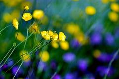Gräsplan och purpurfärgad härlig blomma Arkivbild