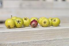 Gräsplan och röda frukter på träbakgrund Royaltyfria Bilder