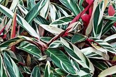 Gräsplan och röda växter royaltyfri foto