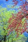 Gräsplan och rött av bladet på träd Arkivbild