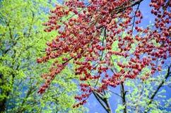 Gräsplan och rött av bladet på träd Fotografering för Bildbyråer