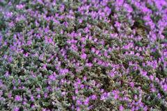 Gräsplan och violet arkivbild