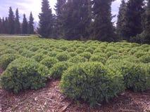 Gräsplan parkerar Royaltyfria Bilder