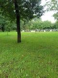Gräsplan parkerar Arkivfoto