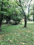 Gräsplan parkerar Royaltyfri Fotografi