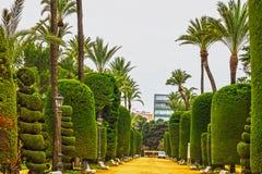 Gräsplan parkerar, Cadiz, Spanien Genovese trädgård Arkivfoton