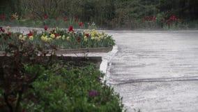 Gräsplan parkerar i regnet arkivfilmer