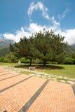 Gräsplan parkerar på backen Arkivbild