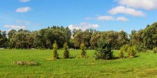 Gräsplan parkerar på en solig dag Arkivbilder