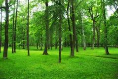 Gräsplan parkerar, skogen Arkivbild